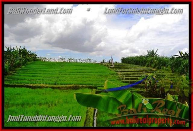 Magnificent PROPERTY 290 m2 LAND SALE IN CANGGU TJCG141