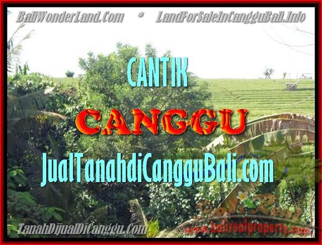 FOR SALE LAND IN CANGGU BALI TJCG143