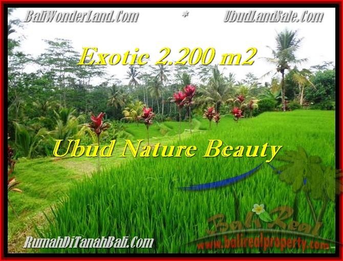 Beautiful 2,200 m2 LAND IN UBUD BALI FOR SALE TJUB480