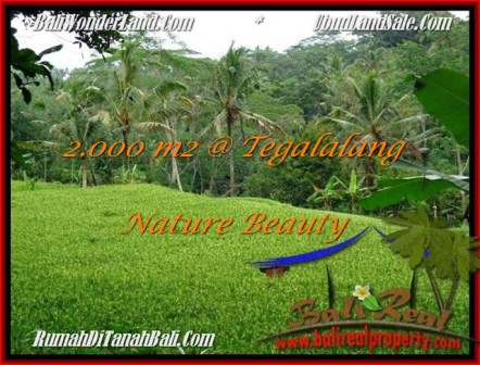 Exotic LAND SALE IN Ubud Tegalalang BALI TJUB490