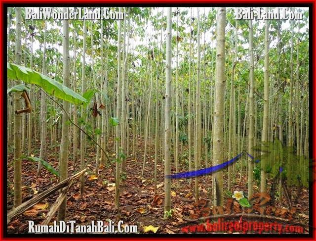 Tabanan Selemadeg BALI LAND FOR SALE TJTB159