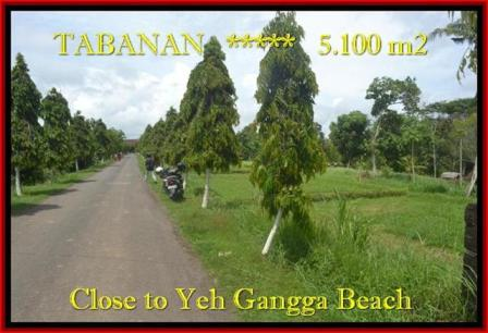 FOR SALE Exotic LAND IN Tabanan yeh Gangga BALI TJTB186