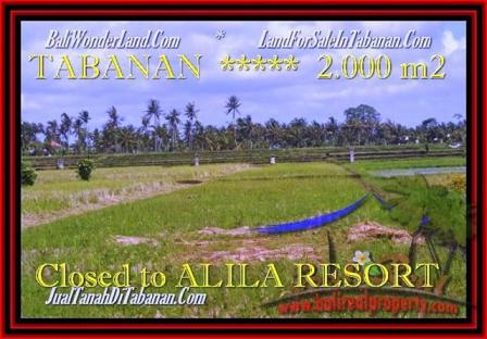 Beautiful PROPERTY Tabanan yeh Gangga 2.000 m2 LAND FOR SALE TJTB187