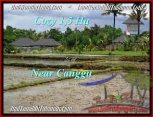 Magnificent 15,000 m2 LAND SALE IN TABANAN BALI TJTB196