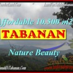 Magnificent LAND FOR SALE IN TABANAN TJTB165