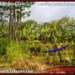 Affordable PROPERTY TABANAN LAND FOR SALE TJTB166
