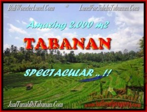 Exotic PROPERTY 2.000 m2 LAND IN Tabanan Selemadeg FOR SALE TJTB172