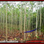 3,000 m2 LAND IN TABANAN BALI FOR SALE TJTB159