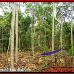 Affordable TABANAN BALI 3,000 m2 LAND FOR SALE TJTB159