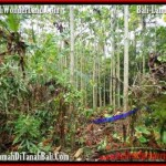 Exotic 3,000 m2 LAND SALE IN TABANAN BALI TJTB159