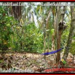 Exotic PROPERTY LAND SALE IN TABANAN TJTB160