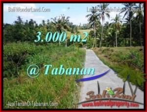 Magnificent PROPERTY 3,000 m2 LAND FOR SALE IN Tabanan Selemadeg TJTB205