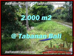 Beautiful PROPERTY 2,000 m2 LAND IN Tabanan Selemadeg FOR SALE TJTB206