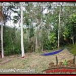 Magnificent PROPERTY Tabanan Selemadeg 3,600 m2 LAND FOR SALE TJTB211