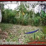 LAND SALE IN Tabanan Selemadeg BALI TJTB211