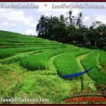 FOR SALE Beautiful 9,500 m2 LAND IN TABANAN BALI TJTB210