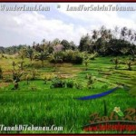 Affordable PROPERTY 9,500 m2 LAND FOR SALE IN Tabanan Selemadeg TJTB210