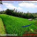 Exotic PROPERTY 9,500 m2 LAND IN Tabanan Selemadeg FOR SALE TJTB210