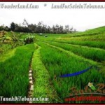 Magnificent PROPERTY Tabanan Selemadeg 9,500 m2 LAND FOR SALE TJTB210
