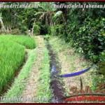 Beautiful PROPERTY 9,500 m2 LAND SALE IN Tabanan Selemadeg TJTB210