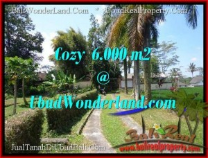 FOR SALE 6,000 m2 LAND IN UBUD TJUB507