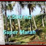 7,500 m2 LAND FOR SALE IN TABANAN BALI TJTB207