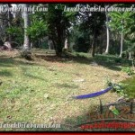 Affordable 7,500 m2 LAND IN TABANAN BALI FOR SALE TJTB207