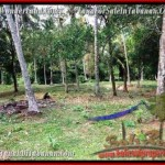 FOR SALE Beautiful PROPERTY LAND IN TABANAN TJTB207