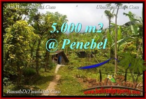 Beautiful PROPERTY Tabanan Jatiluwih 5,000 m2 LAND FOR SALE TJTB215