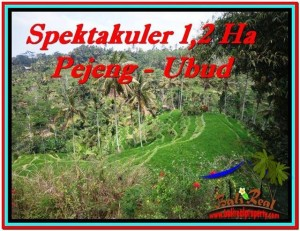 FOR SALE Beautiful PROPERTY LAND IN UBUD TJUB520