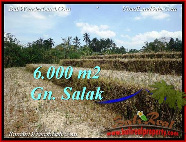 Exotic 6,000 m2 LAND IN TABANAN BALI FOR SALE TJTB221