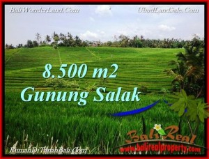 Magnificent PROPERTY LAND SALE IN TABANAN TJTB223