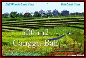 FOR SALE Exotic PROPERTY 500 m2 LAND IN CANGGU TJCG192