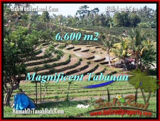 Magnificent PROPERTY 6,600 m2 LAND IN Tabanan Selemadeg FOR SALE TJTB204