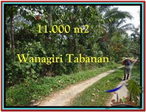 Affordable TABANAN BALI 11.000 m2 LAND FOR SALE TJTB213