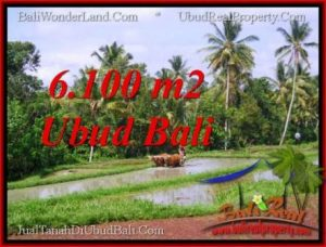 Beautiful PROPERTY 6,100 m2 LAND SALE IN Ubud Tegalalang TJUB552