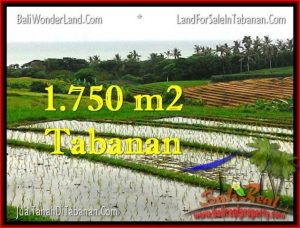 Exotic 1,775 m2 LAND IN TABANAN BALI FOR SALE TJTB264