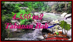 Magnificent PROPERTY 4,550 m2 LAND FOR SALE IN Tabanan Penebel TJTB284