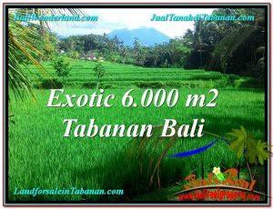 FOR SALE Magnificent LAND IN Tabanan Penebel BALI TJTB306