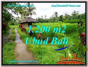 Affordable PROPERTY 1,200 m2 LAND FOR SALE IN Ubud Payangan TJUB559