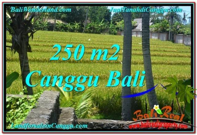 Exotic PROPERTY LAND SALE IN Canggu Pererenan BALI TJCG207