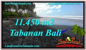 Beautiful PROPERTY 11,450 m2 LAND IN Tabanan Kerambitan FOR SALE TJTB291