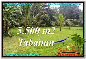 FOR SALE Magnificent LAND IN Tabanan Penebel BALI TJTB295
