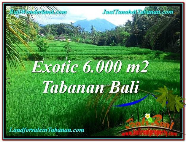 Beautiful PROPERTY 6,000 m2 LAND SALE IN TABANAN TJTB306