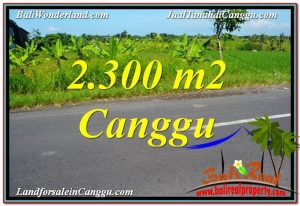 Beautiful PROPERTY 2,300 m2 LAND SALE IN CANGGU BALI TJCG209