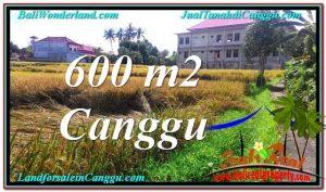 Beautiful PROPERTY LAND SALE IN Canggu Pererenan BALI TJCG211
