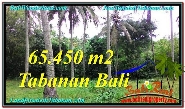 Beautiful PROPERTY Tabanan Selemadeg 65,450 m2 LAND FOR SALE TJTB290