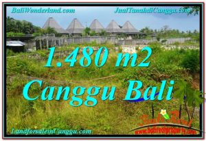 Affordable PROPERTY LAND FOR SALE IN Canggu Pererenan BALI TJCG212