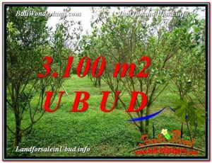 Affordable PROPERTY 3,100 m2 LAND IN Ubud Tegalalang FOR SALE TJUB593