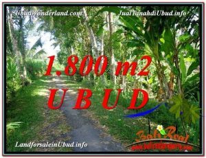 Magnificent PROPERTY 1,800 m2 LAND SALE IN Ubud Payangan TJUB597